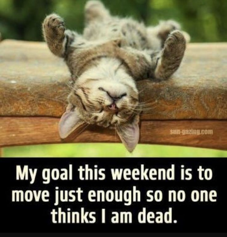 This is so what I'm doing this weekend!