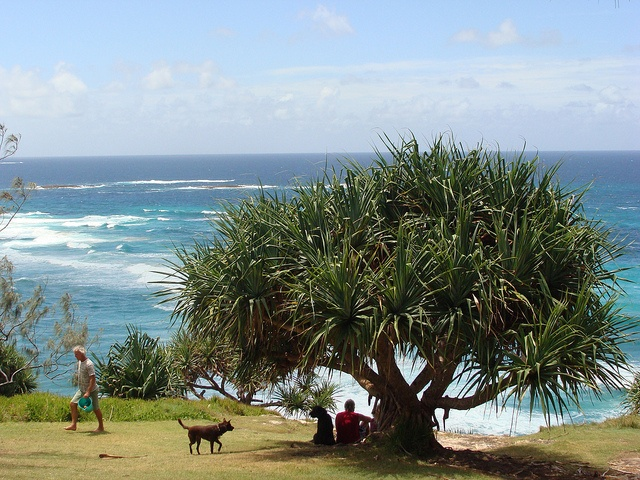 Point Lookout at North Stradbroke Island is a top picnic spot.