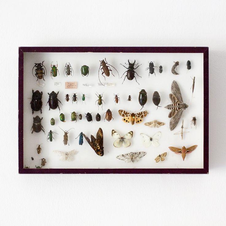 Image of Caja de insectos / Años 60 / Francia