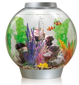 Mini salt water aquarium.  I want one for my office!