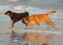 Hilton Head Island, South Carolina Pet-Friendly Hotels, Dog-Friendly Restaurants, Dog Parks and Travel Guide