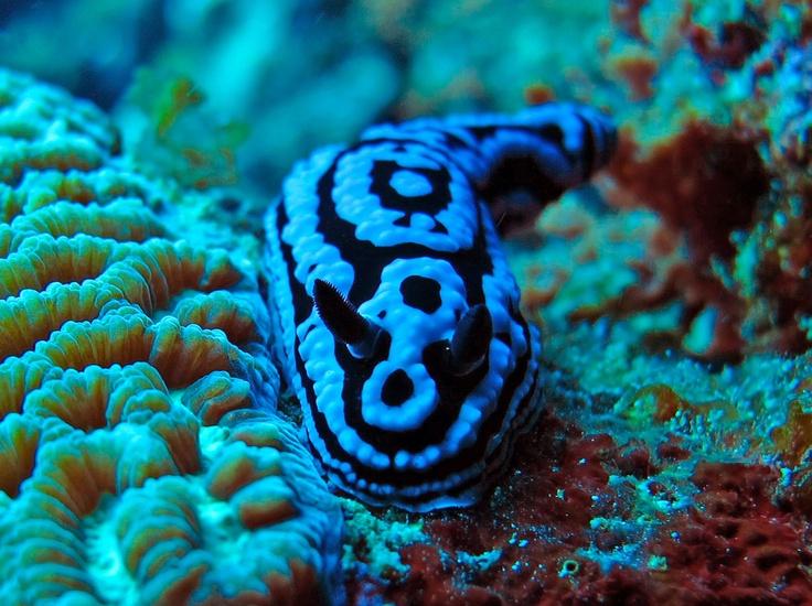 14 best Dream Job Marine Biology images on Pinterest Dream job - marine biologist job description