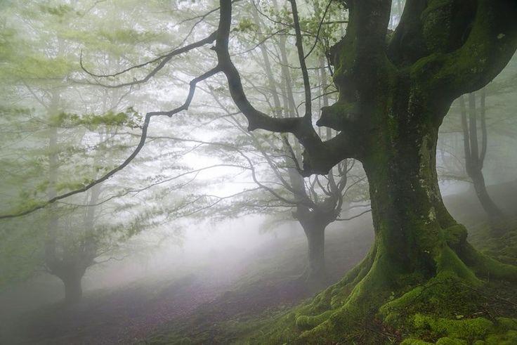 Испания: Национальный парк Горбеа (Gorbea Natural Park) — мистический лес страны басков http://cogitoplanet.com/2015/06/ispaniya-nacionalnyj-park-gorbea-gorbea-natural-park-misticheskij-les-strany-baskov/