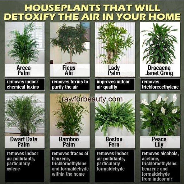 1000 images about air purifying plants on pinterest for Low maintenance air purifying plants