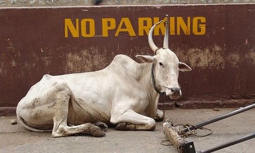 #Cow_slaughter to be tried under UP Goonda Act
