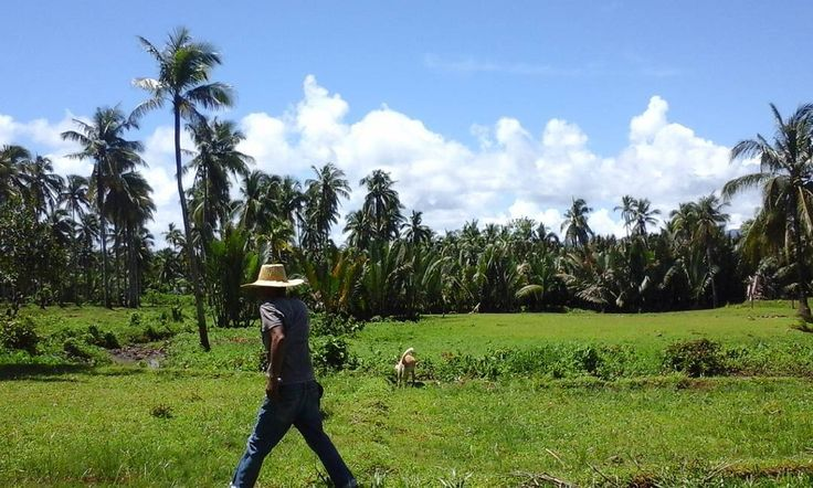 Happy morning!  Thank a farmer of you're eating today! ^^ #itsmorefuninthephilippines  #philippines #surigaodelnorte  #summer  #green  #blue #rice  #crops  #farm  #farmlife #vacation  #sojourn  #bakasyonista #bakasyon #travel #countryside #province http://tipsrazzi.com/ipost/1504689972903798408/?code=BThu47kBeaI
