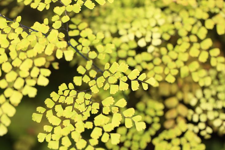 https://flic.kr/p/ciU41Y | Leaves / 葉(は) | Gunma Flower Park, Maebashi-shi(city) Gunma-ken(Prefecture), Japan  群馬県前橋市(ぐんまけん まえばしし) ぐんまフラワーパーク