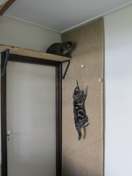 A cat is climbing on a climbing wall/IKEA HACK made of an OSTED rug attached to the wall.