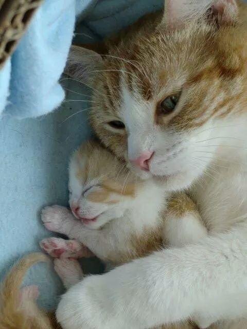 25 Best Ideas About Sleepy Cat On Pinterest Cats Cute