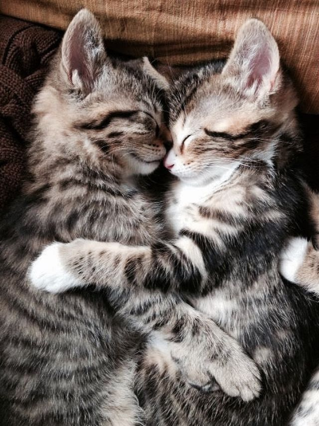Aaww... kittens, litter-mates They are darling!! ♥♥