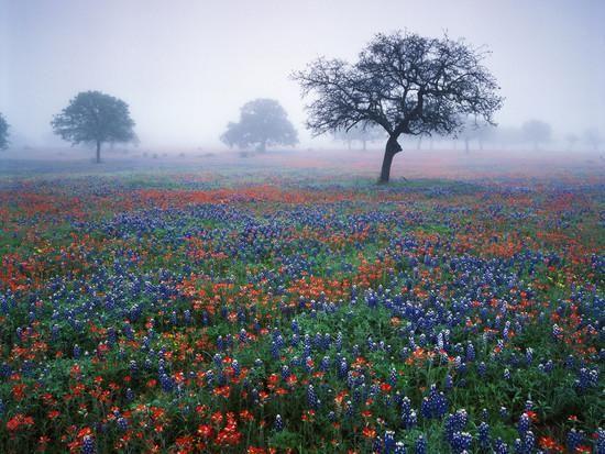 30 best Farben images on Pinterest - Designer Esstisch Kaleidoskop Effekte