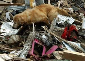 ASPCA Disaster Preparedness