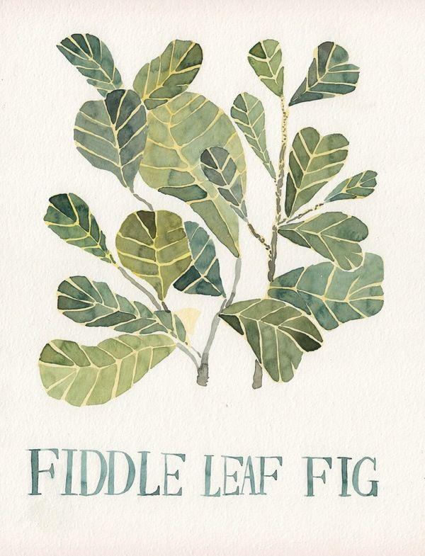 fiddle leaf fig.: Botanical Illustration, Watercolor, Pattern, Fiddleleaffig, Art, Fig Tree, Leaves, Fiddle Leaf Fig, Figs