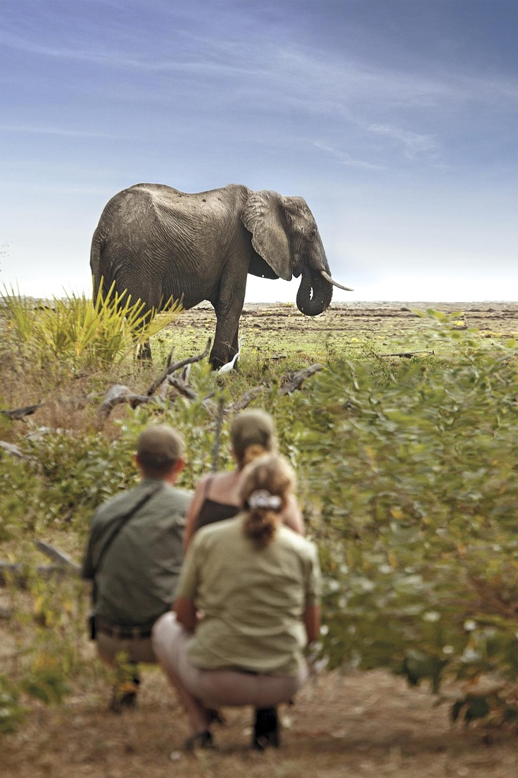 African Cape and Safari Honeymoon - Click the image for more info