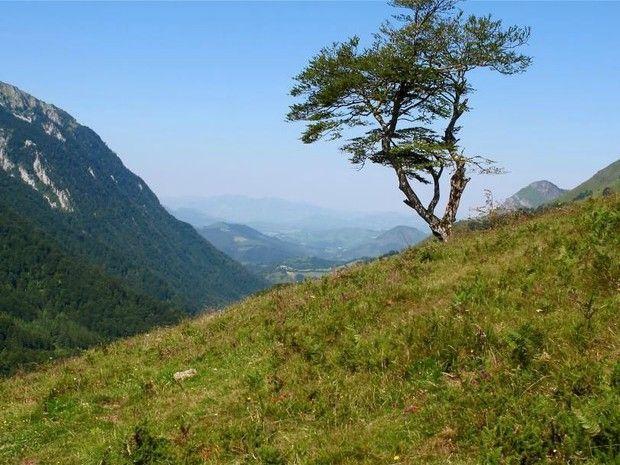 Paysage aux alentours du col de Marie-Blanque, entre la vallée d'Ossau et la vallée d'Aspe, dans les Pyrénées-Atlantiques (Aquitaine).