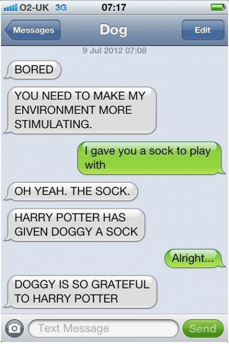 Harry Potter has given doggy a sock!Doggie,  Internet Site,  Website, Harrypotter, Web Site, Dog Texts, Funny, Dogs Texts, Harry Potter