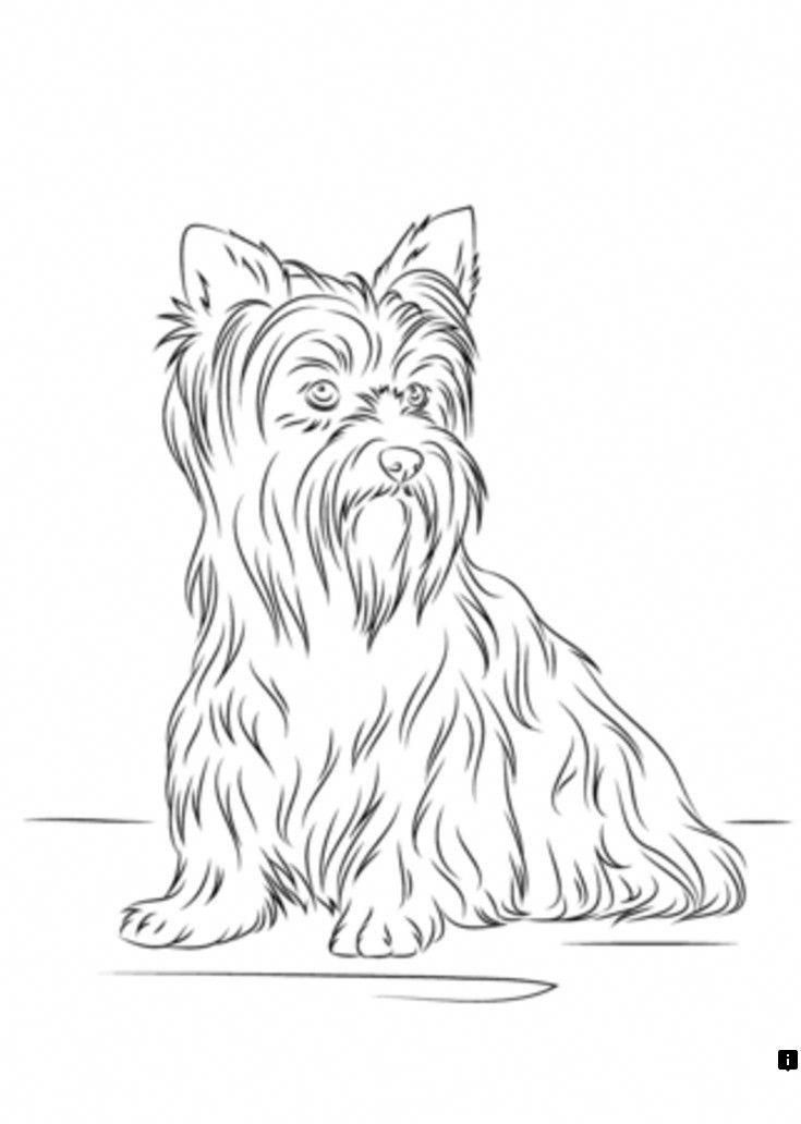 Yorkshire Terrier Energetic And Affectionate Dog Coloring Page Puppy Coloring Pages Yorkshire Terrier
