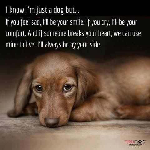 Your just not a dog your someone BC you will never be something you are always family Don't shop adopted or rescue please we got so many animals in these shelters that needs forever loving family home please save lives that's what it's really about saving lives always