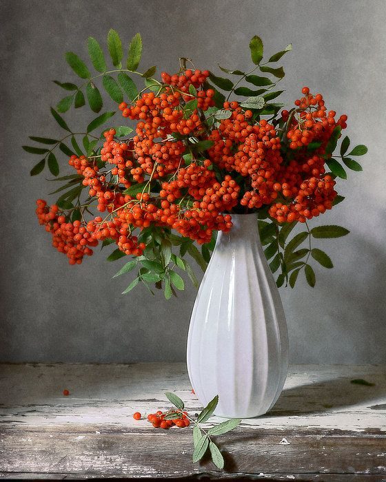 http://nikolay-panov.artistwebsites.com/products/rowan-berries-in-white-vase-nikolay-panov-art-print.html Autumn still life with rowan tree red berries and leaves in white vase on gray background lighted by daylight in rustic country house