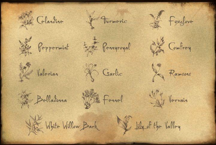 Claire's list of healing herbs. STARZ photo