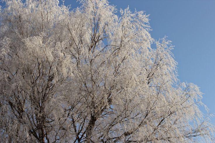 Жизнь горожанки в деревне: (-14)      Делюсь зимним пейзажем