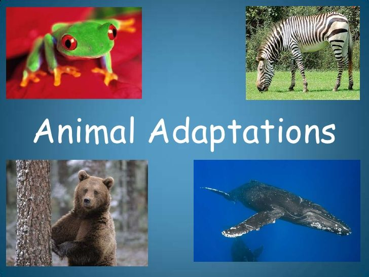 Animal Adaptations                                                                                                                                                                                 More