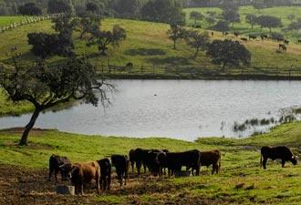 REPORTAJE El agua y el campo bravo ¿Lluvia a gusto de todos? #reportaje #campo #toros #toreros #taurinos - Mundotoro.com