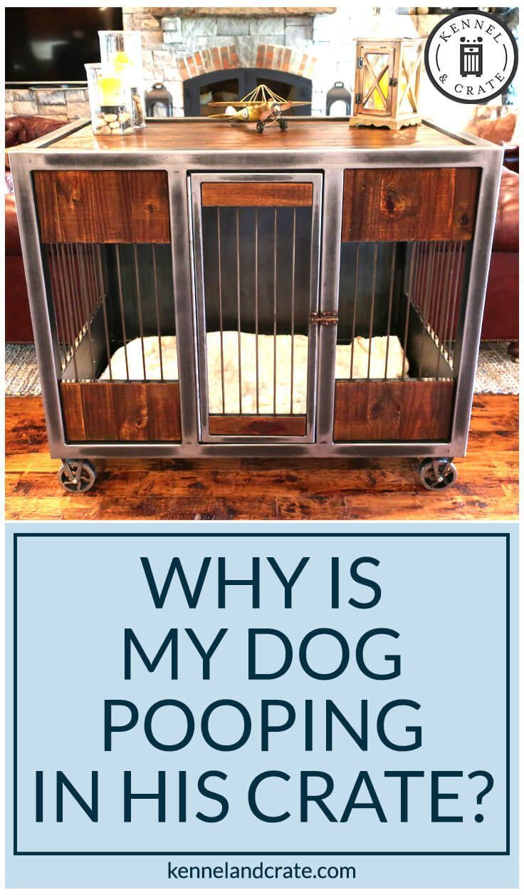 Reasons And Solution Pet Pooping Inside A Stylish Dog Crate