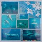 Scrapbook.com Layout Projects: Themes...sea world 2Seaworld Sd, Crafts Ideas, Scrapbook Com, Sea Green, Seaworld Scrapbook, Scrap Ideas, Dolphins Beluga Whals, Scrap Sea, Beluga Whales