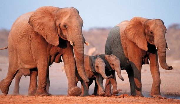 South Africa... elephant family :)