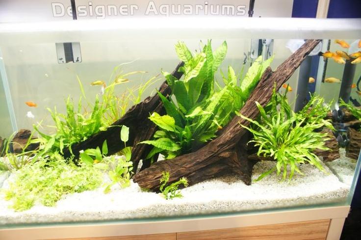 Aquatics Aquatics Live