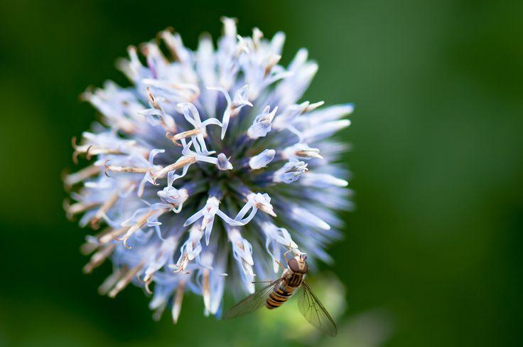 nettare blu by Graziella Serra Art & Photo on 500px
