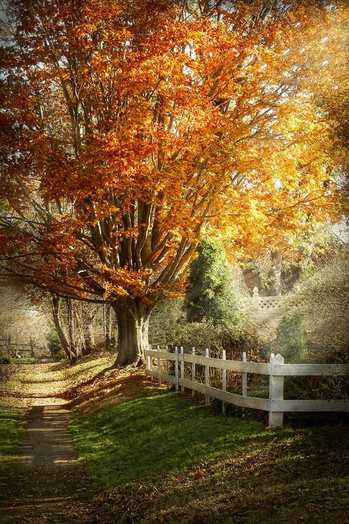 Autumn is here...take long walks and enjoy this special time together...Cindy