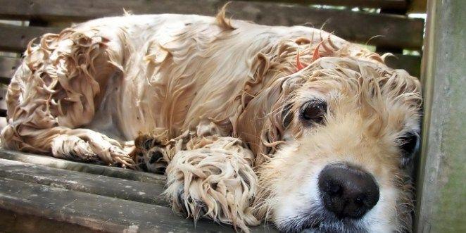 Ταινία μικρού μήκους για την εγκατάλειψη των ζώων δημιούργησαν μαθητές του Γυμνασίου Μελεσών - DogWay.gr