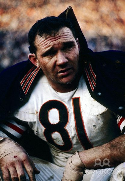Chicago Bears defensive end Doug Atkins (81) on the bench during the 1963 season.