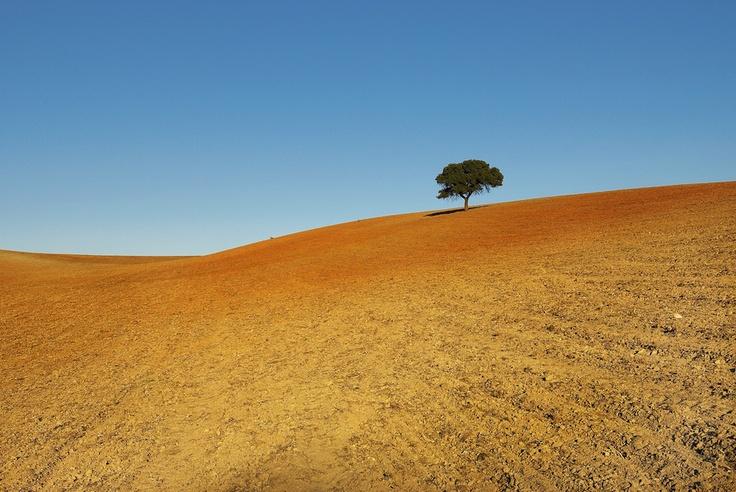 Landscape_14 by Pedro  Pinho, via 500px