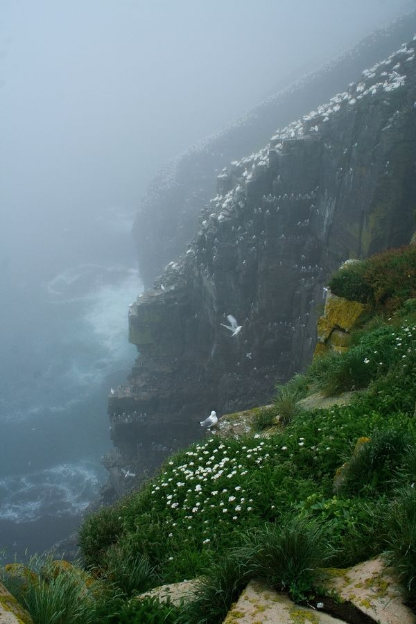 Cape St. Mary's, Newfoundland