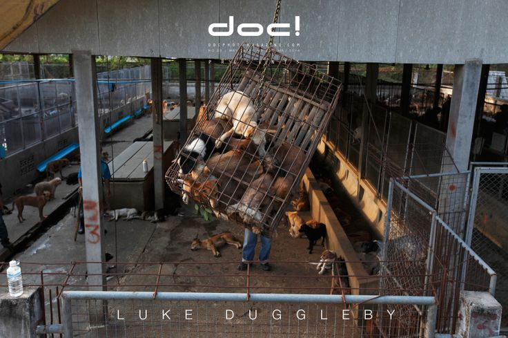 doc! photo magazine presents: Luke Duggleby - YOU HAVE TO BE IN THE SUBJECT (interview; doc! #23; pp. 37-51) & THAILAND'S ILLEGAL DOG MEAT TRADE (photo story; pp. 52-73)