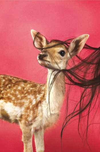 Fawn, by Ryan McGinley, The Paris Review, Summer 2012