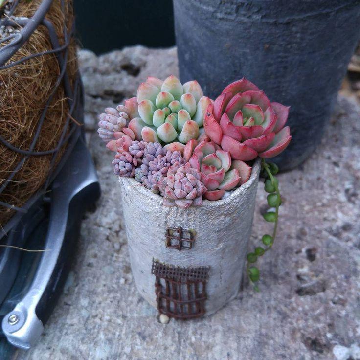 2016.3.6 おはようございます(*^^*) @jewelgarden_acoさんのリメ缶に寄せ植え #リメ缶#多肉#多肉植物#多肉寄せ植え#多肉女子#タニラー#succulent #garden #gardening #ガーデン