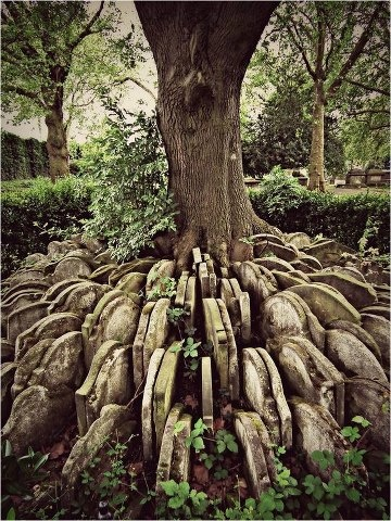 The Hardy Tree in the churchyard of St. Pancras Old Church in London, hundreds of old gravestones circle an ash tree. In the 1860's an older part of the churchyard was designated to make way for a new railway line. Coffins were removed with care and reburied elsewhere. Some of the headstones were placed in a circular pattern around a young ash tree in the churchyard. Over the decades the tree has, inevitably grown and parts of the headstones nearest the tree have disappeared in to its…