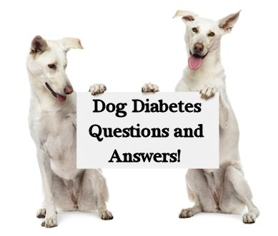Dog diabetes questions and answers