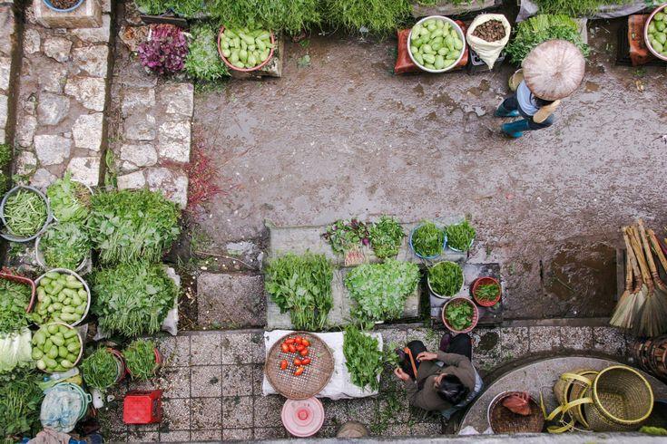 Warzywa i owoce – REAKTYWACJA – domowa uprawa – przepis jak wyhodować warzywa na parapecie?