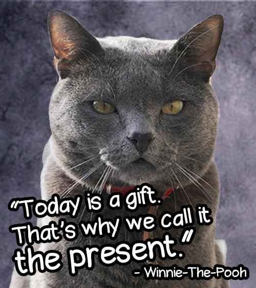 14 Cheesy Senior Quotes From Cats - BuzzFeed Mobile