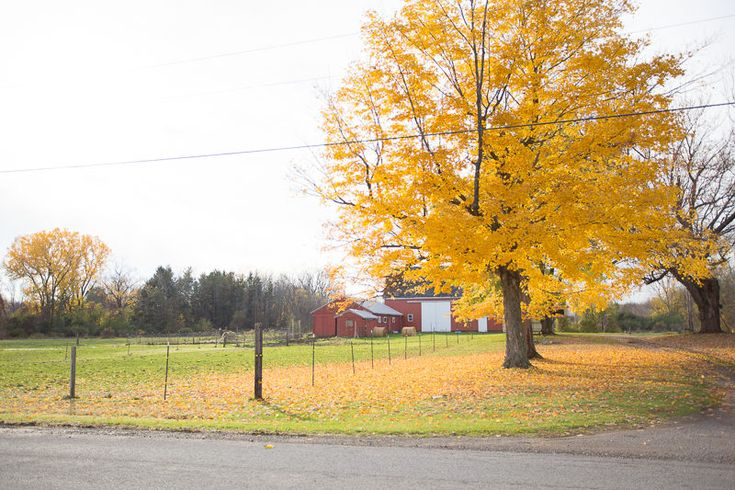 A gorgeous view of autumn in Western New York, and why we love calling this old farm our home.