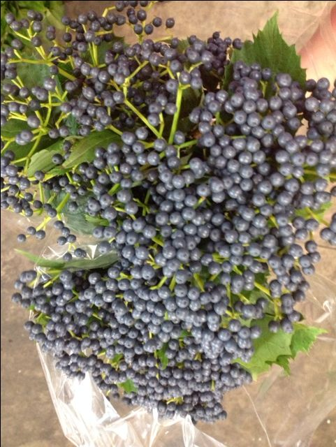 Blue Viburnum Berries...available in Autumn.Sold in bunches of 10 stems from the Flowermonger the wholesale floral home delivery service.