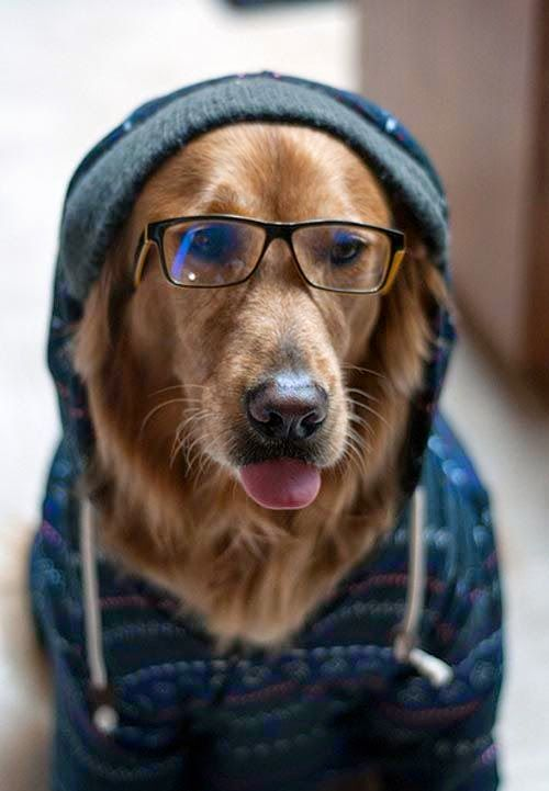 "* * "" Like me hoodie? Good. Cuz me don'ts,, especially wif deese spex."""