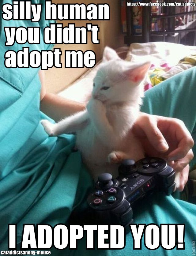 I adopted you! So true!!