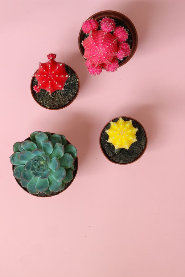 Diy Home  :   Illustration   Description   DIY Colourful Cactus & Succulent Garden / The Sweet Escape    -Read More –   - #DIYHome