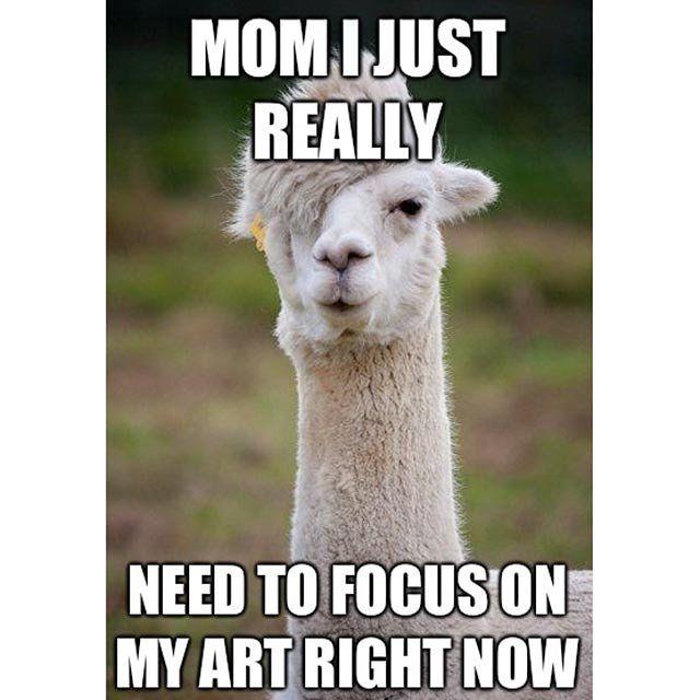 Best 25+ Llama Meme Ideas On Pinterest